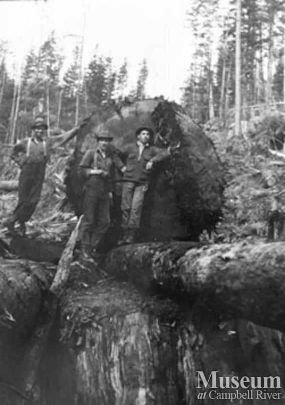 Loggers with a big one at Port Neville