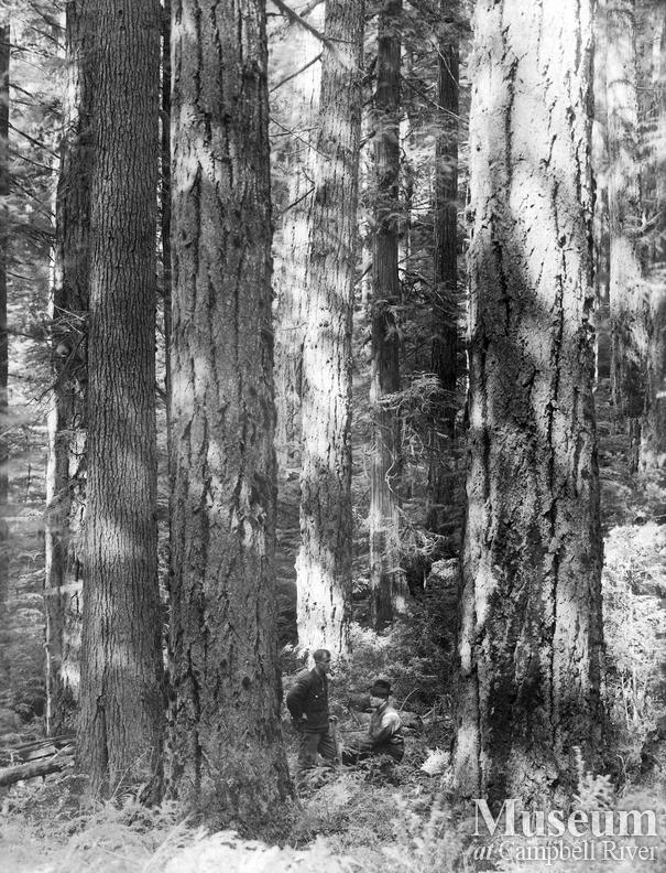 A stand of timber on Redonda Island