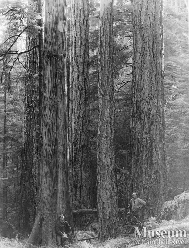 Stand of timber on Thurlow Island