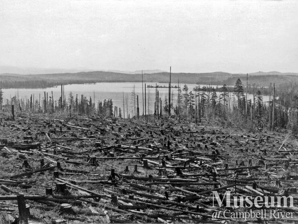 Elk River Timber Co. clear cut near Campbell River