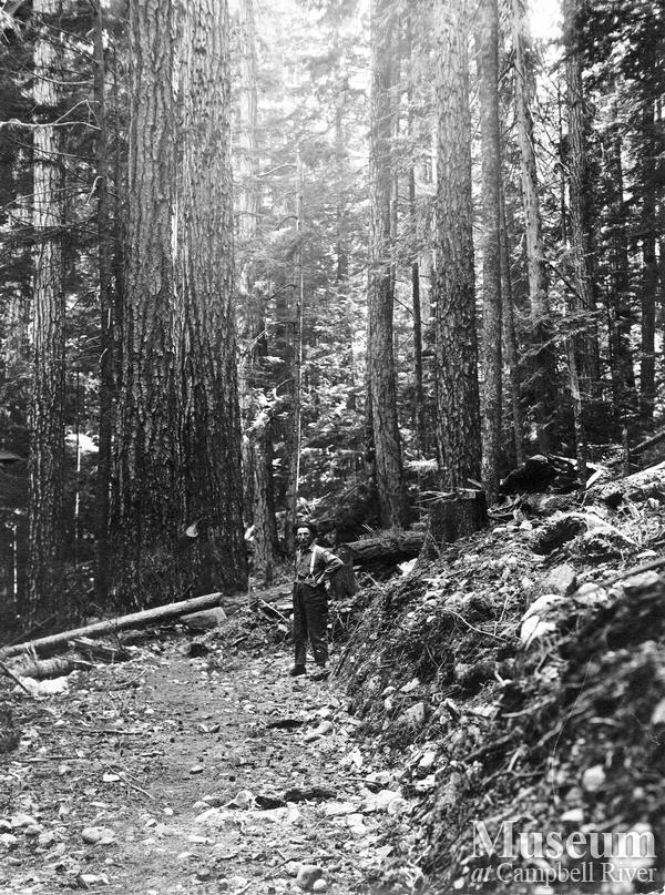 J. Phelps beside a stand of timber near Elk Bay