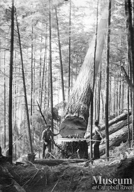 Hastings Logging Co. operations at Heydon Lake
