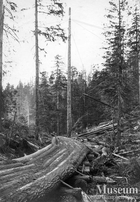 Wooden skid road and spar tree
