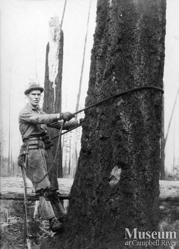 Preparing to climb a spar tree