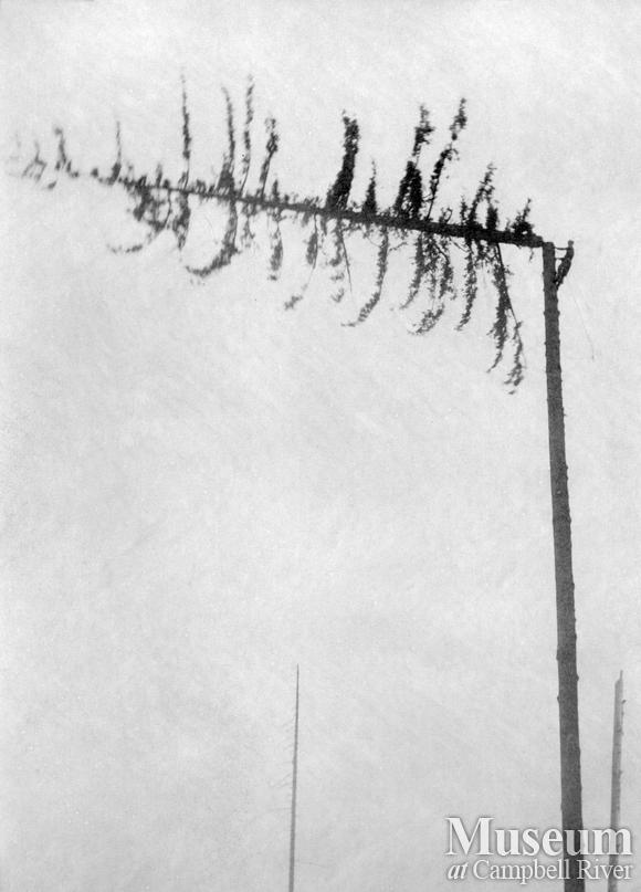 Preparing a spar tree