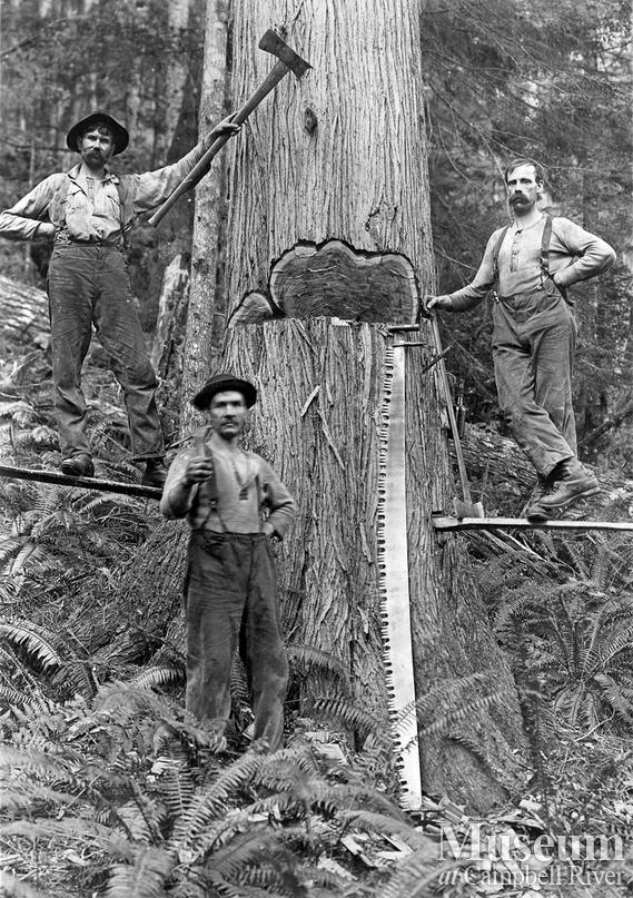 Bendickson Logging in Jervis Inlet