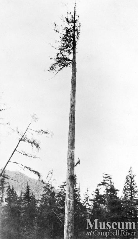 Bendickson Logging high rigger trims a spar