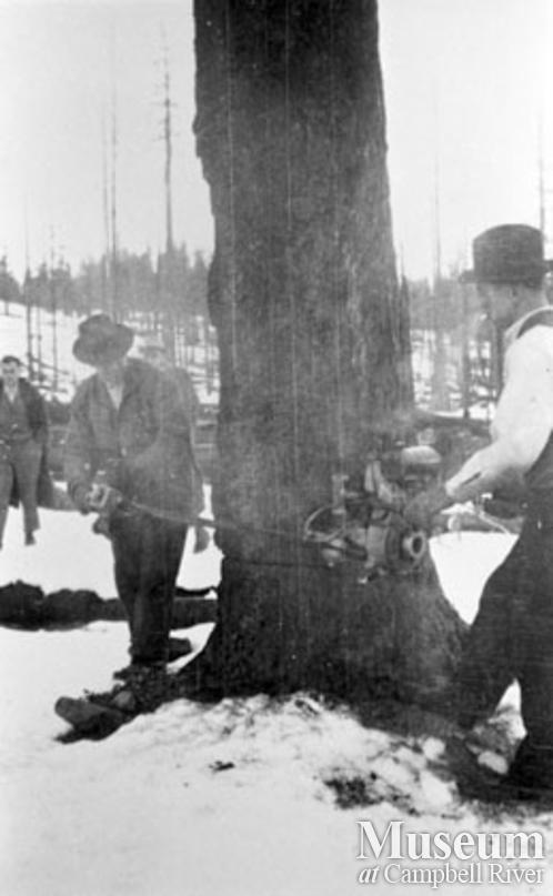 Falling a snag with a two-man chainsaw