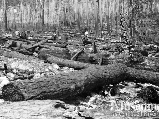 Aftermath of 1925 Quadra Island forest fire