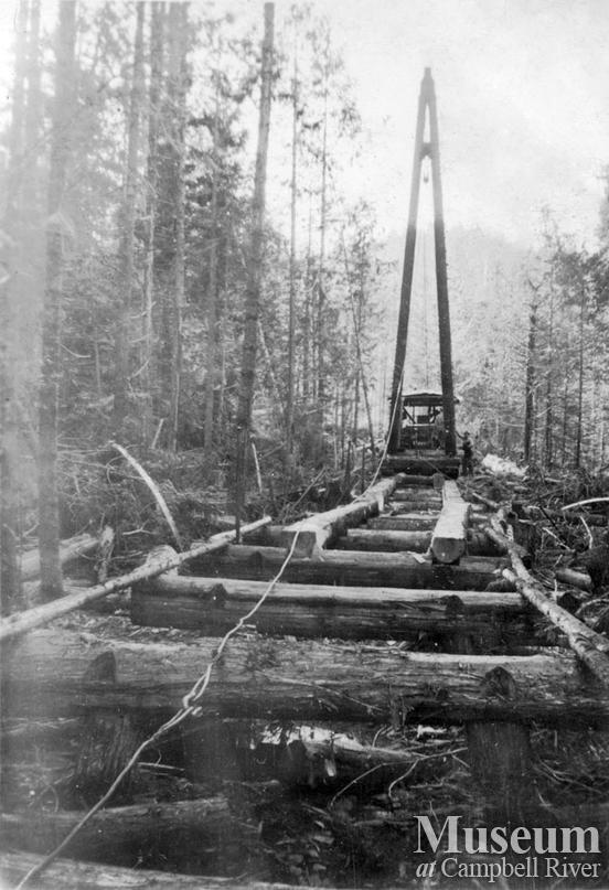 Building timber road for truck logging operation