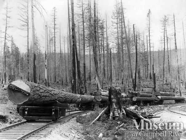 A loaded log train near Rock Bay area