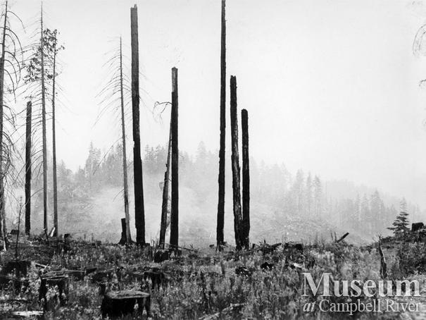 The Sayward Forest Fire