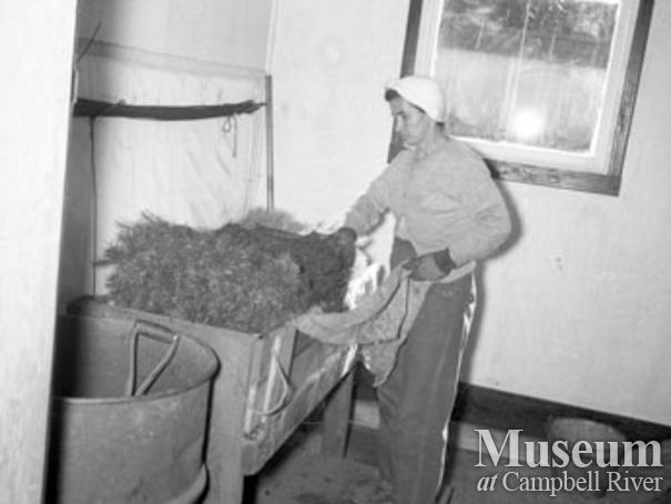Preparing seedlings Campbell River Nursery