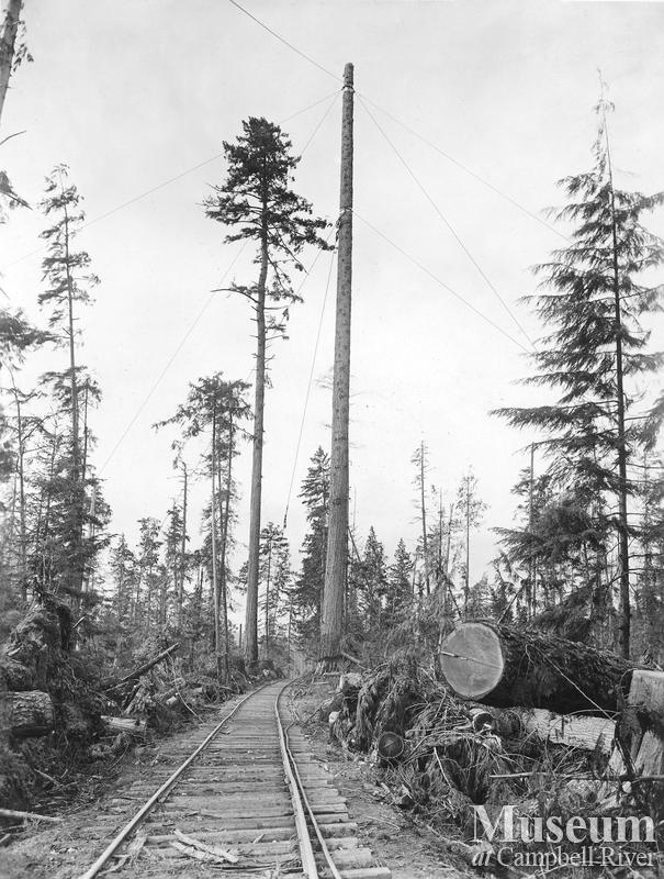 High lead spar tree near Menzie's Bay