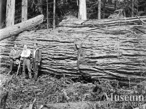 Merrill Ring Wilson Ltd. camp at Big Tree Creek