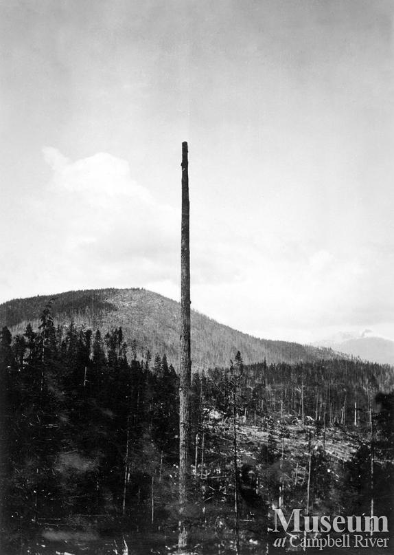 Topping a spar tree at Hemming Lake